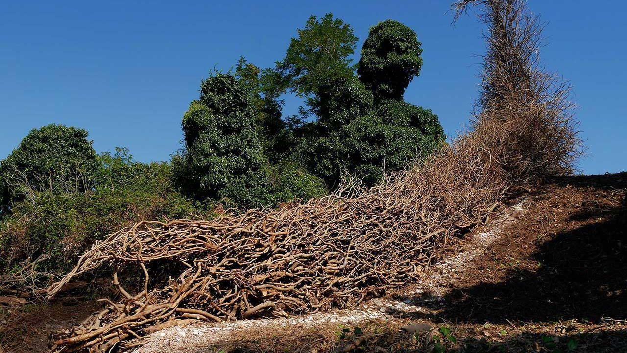 01-_Terra_Terra-Biennale-di-Venezia_-Isola-di-San-Secondo
